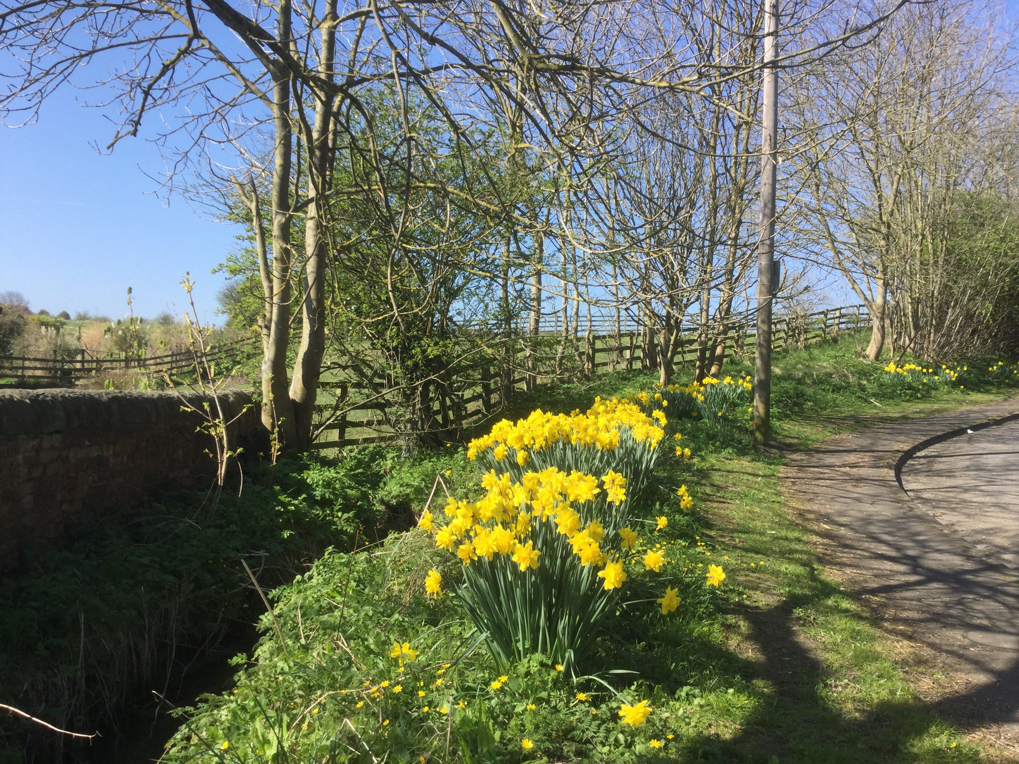 Walk thr the dene april 2017 2